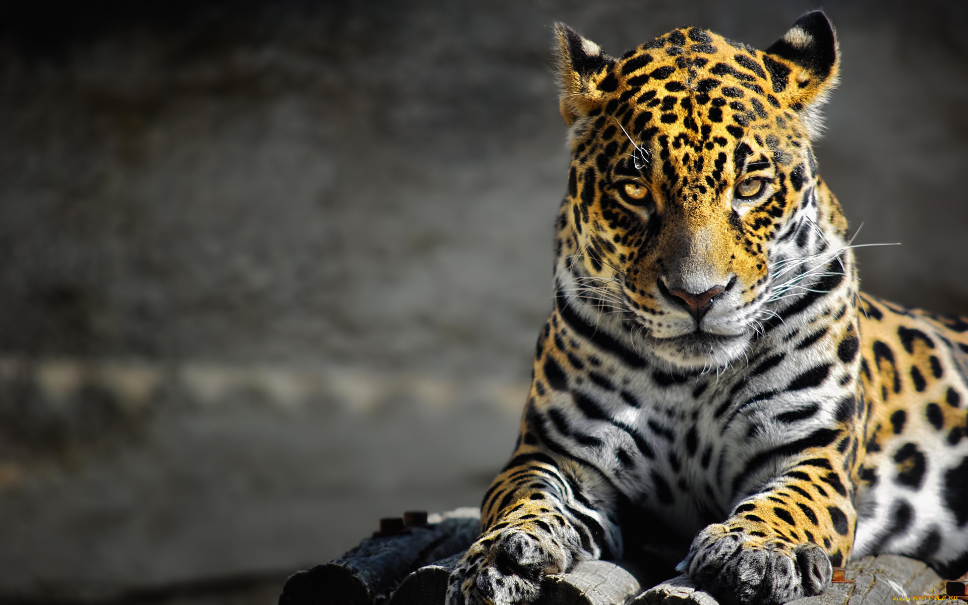 красивые картинки на телефон животные бросает себе вызов